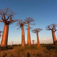 Une escapade à Madagascar