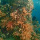 Une de mes plus belles plongées, « The Passage », à Raja Ampat…