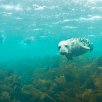 L'activité aquatique n°1 de vos séjours en bord de mer!