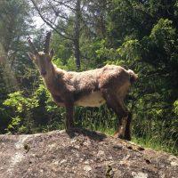 La découverte de la nature sauvage à portée de pieds!