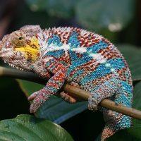 Profiter de la beauté de la nature en voyageant à Madagascar