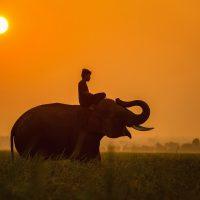 Meilleures choses à faire en Tanzanie : Attractions touristiques